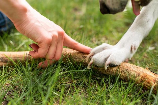 Крупным планом собака играет с владельцем в парке