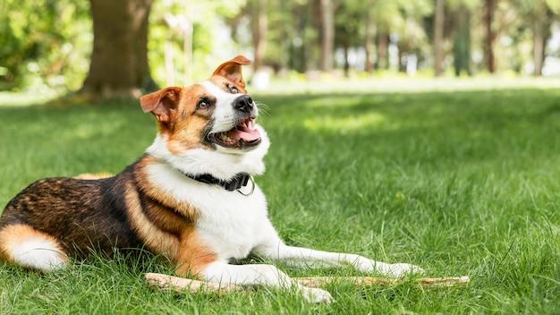 外の時間を楽しんでいる愛らしい犬の肖像画