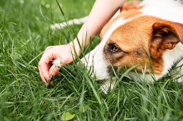 Милая собака конца-вверх наслаждаясь временем снаружи