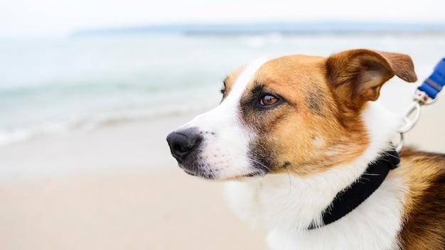 Крупным планом очаровательны маленькая собака, наслаждаясь время снаружи