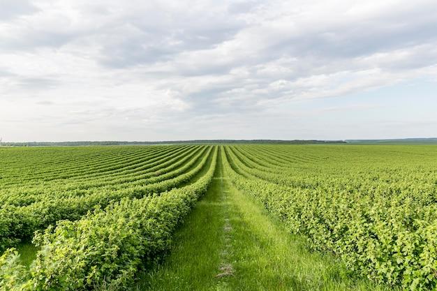 高角度の農地ビュー