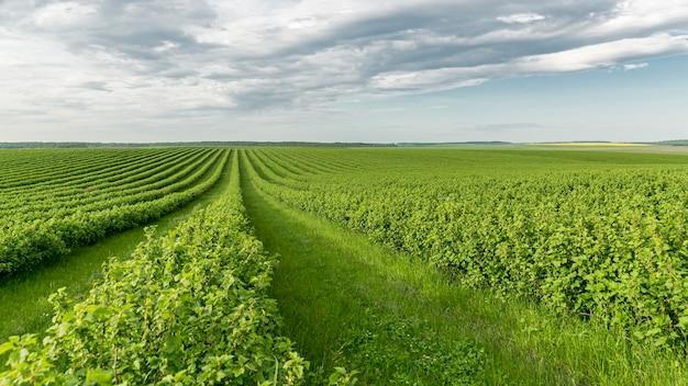 田舎の高角度の農地