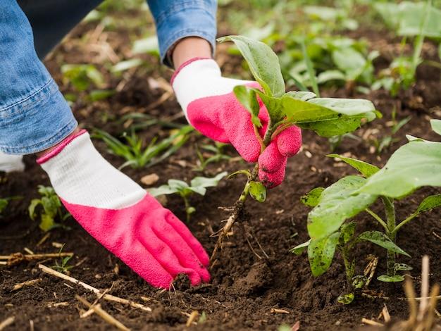 地面に何かを植える女性
