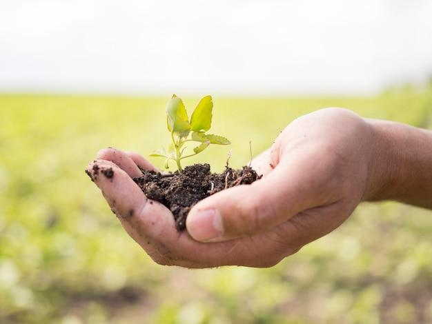 小さな植物を保持している側面図の人