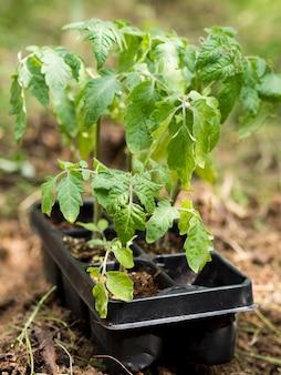 植木鉢の植物のクローズアップ