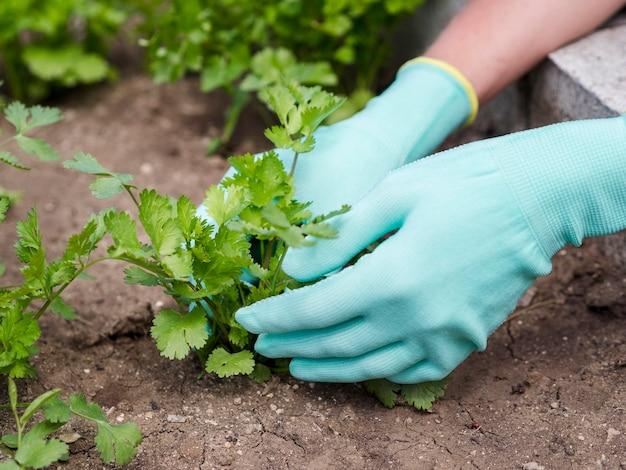植物を地面に置きながら手袋を着用する女性