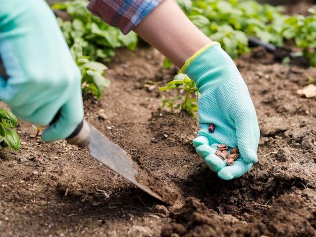 地面に豆を植える女性