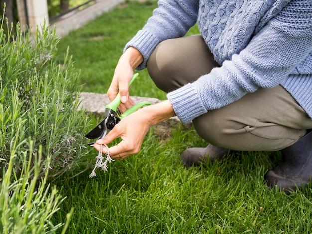 彼女の庭でいくつかの植物を切る女性