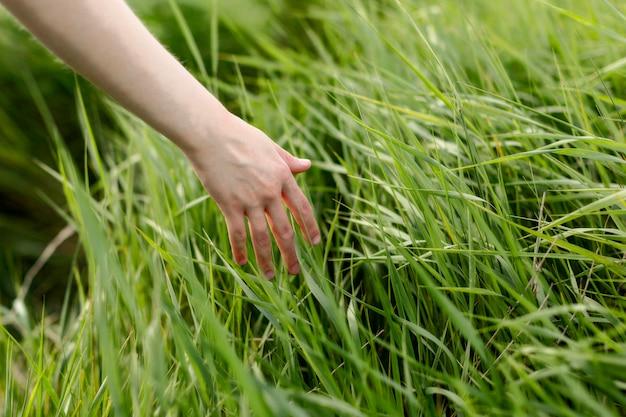 自然の中で草を介して手をスライドする女性