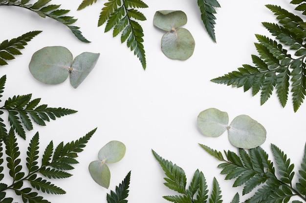 Вид сверху коллекция зеленых листьев концепции