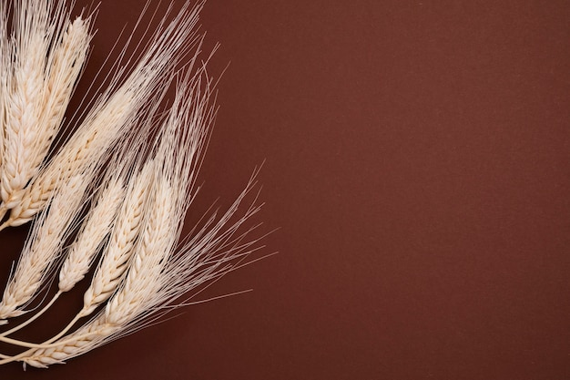 コピースペースを持つトップビュー有機小麦