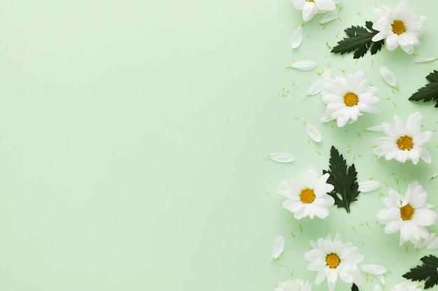 コピースペースと美しい花のコンセプトのフラットレイアウト