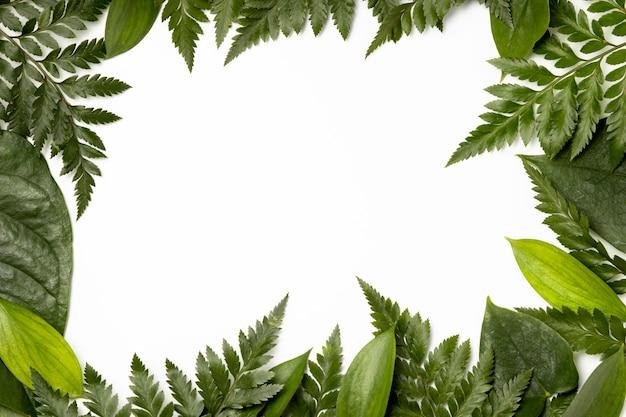 トップビューの葉の背景