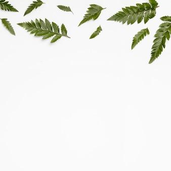 Вид сверху зеленые листья с копией пространства