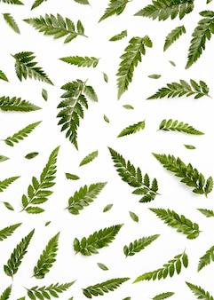 緑の葉のトップビューの品揃え