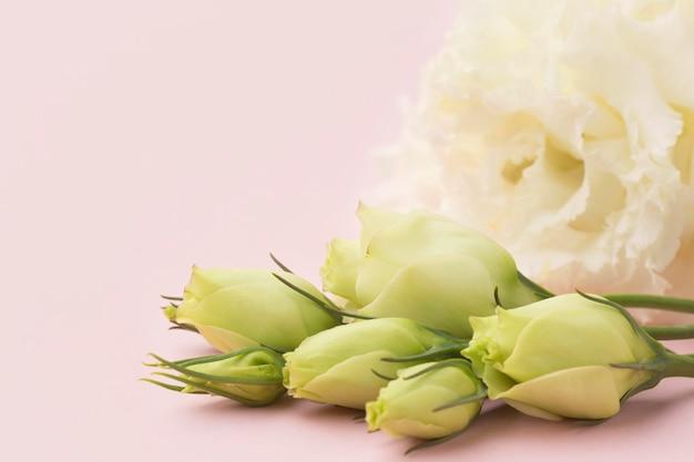 クローズアップの白い花