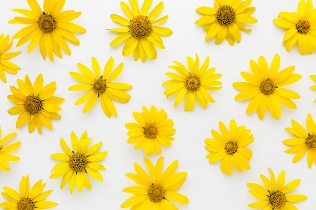 フラット横たわっている黄色のヒナギク