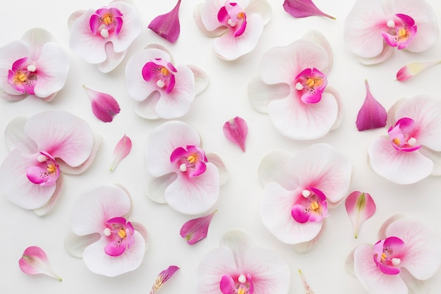 Плоская композиция орхидей