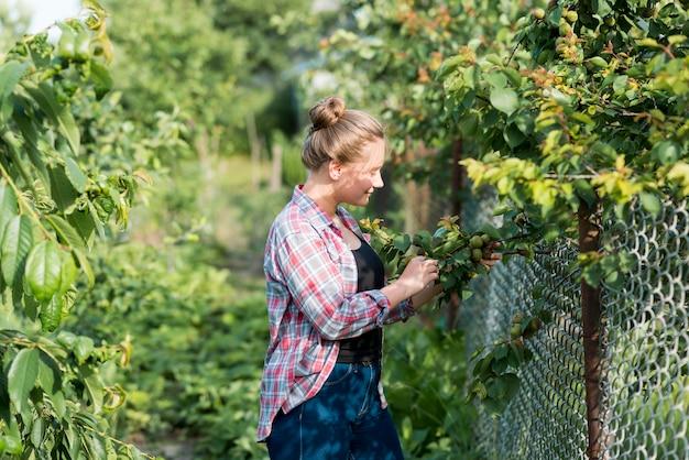 Вид сбоку девушка собирает фрукты