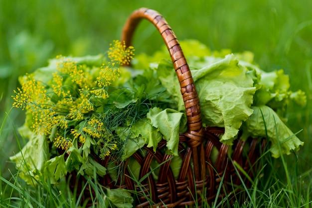 緑の芝生にレタスのバスケット