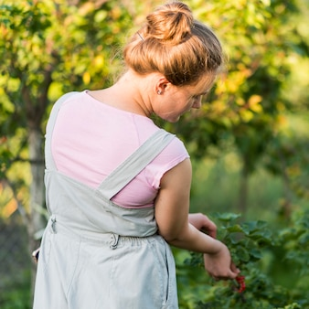 Вид сзади девушка собирает фрукты