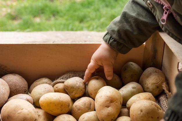 ジャガイモに触れる子供の手のクローズアップ