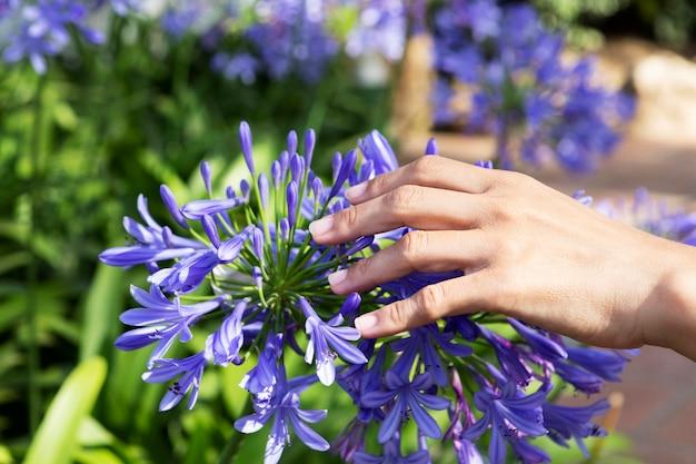 屋外の手で花に触れる人