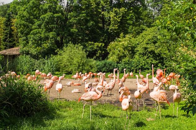 Фламинго птицы, стоящие в парке
