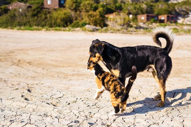 犬と猫が一緒に屋外で遊ぶ