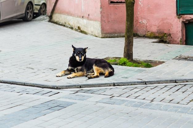 Уличная собака лежит