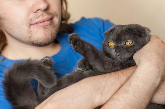 Владелец и концепция питомца - молодой человек держит серую кошку шотландскую вислоухую