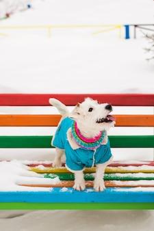 Собака джек рассел терьер играет в зимнем парке