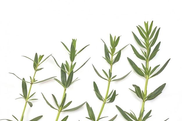 白、トップビューで分離された新鮮な緑のローズマリー。芳香ハーブ。