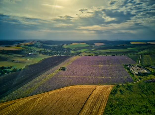Вид с воздуха на пейзаж с лавандой и пшеничным полем