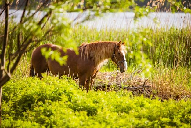 川のある田園風景で自由に放牧する馬