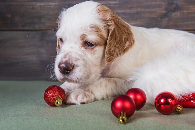 Английский сеттер щенок и елочные игрушки шарики.
