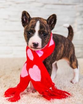 心でサンタスカーフで面白いバセンジーの子犬犬