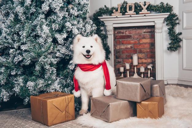 クリスマスツリーの近くの白いふわふわ犬サモエド