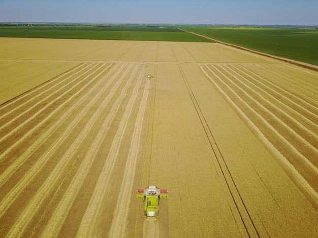 Воздушная съемка желтых комбайнов работая на пшеничном поле.