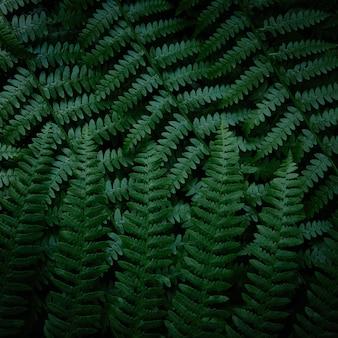 Темно-зеленые ветви папоротника квадратный узор крупным планом