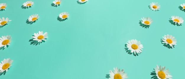 抽象的な明るいミントグリーンの背景に多くのカモミールの花の花枠。コピースペース。等角投影図。