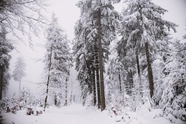 冬の背景、雪と氷の中の森