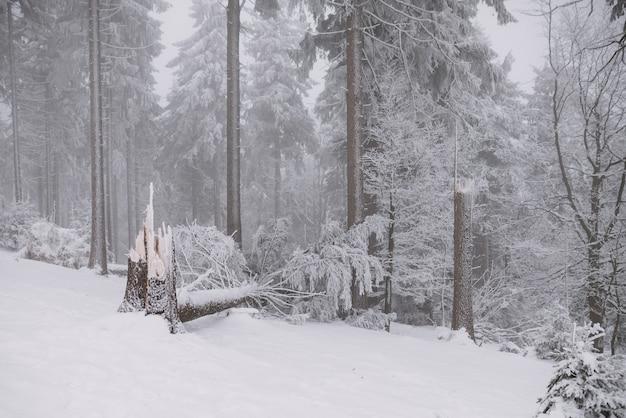 森林、冬、雪の壊れた木