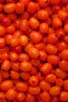 オレンジ色の新鮮な海クロウメモドキのクローズアップ。