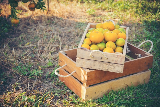 Апельсин в деревянной коробке в саду