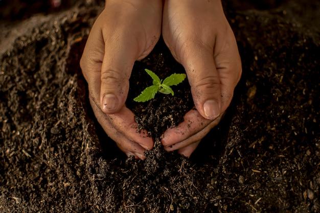 彼のマリファナの植物のために優しく豊かな土を持っている手