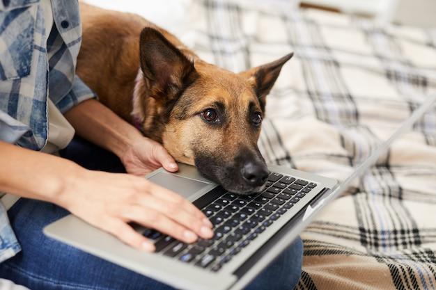 飼い主を待っている退屈犬