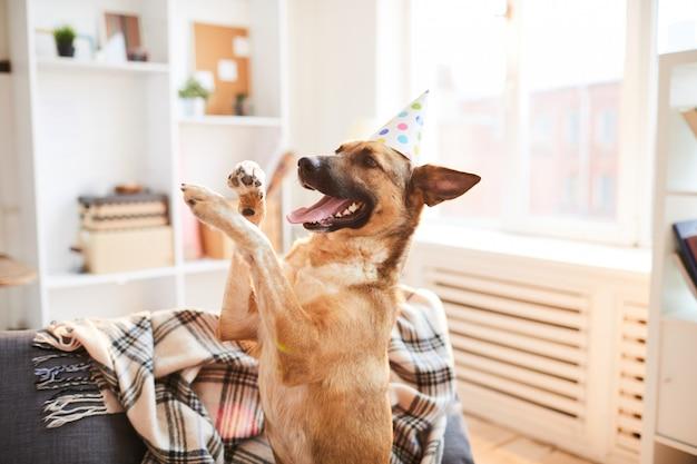 День рождения песика