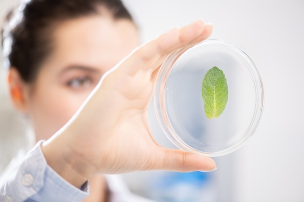 Анализ листьев в чашке петри