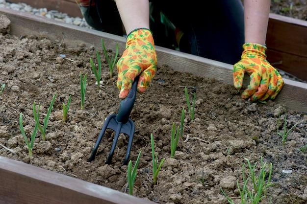 庭で春の仕事のための女性の手